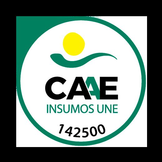 CAAE 142500