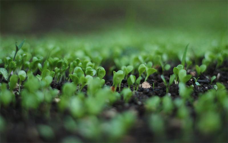 Cultivos más eficientes